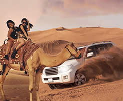 Desert Safari Land Cruiser